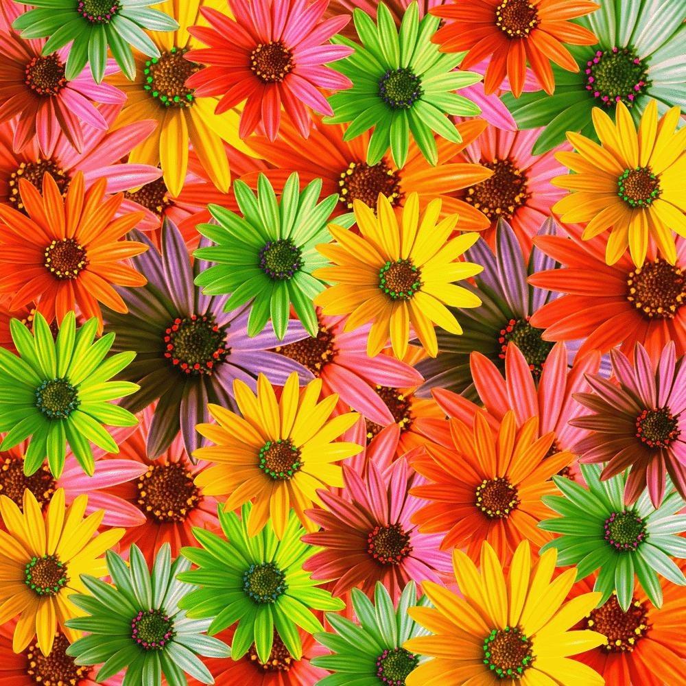 immagini-fiori-180